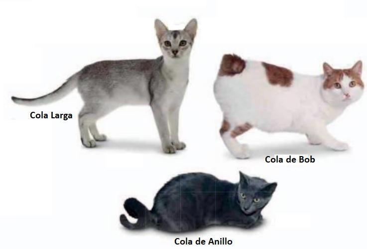 Cola de los Gatos