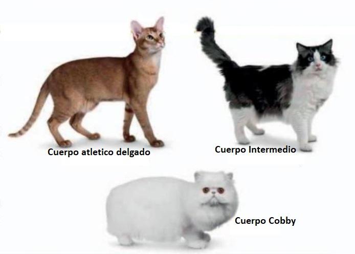 Cuerpo del gato
