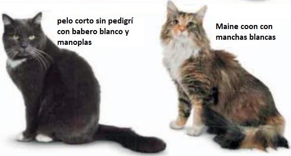 Gato con manchas blancas
