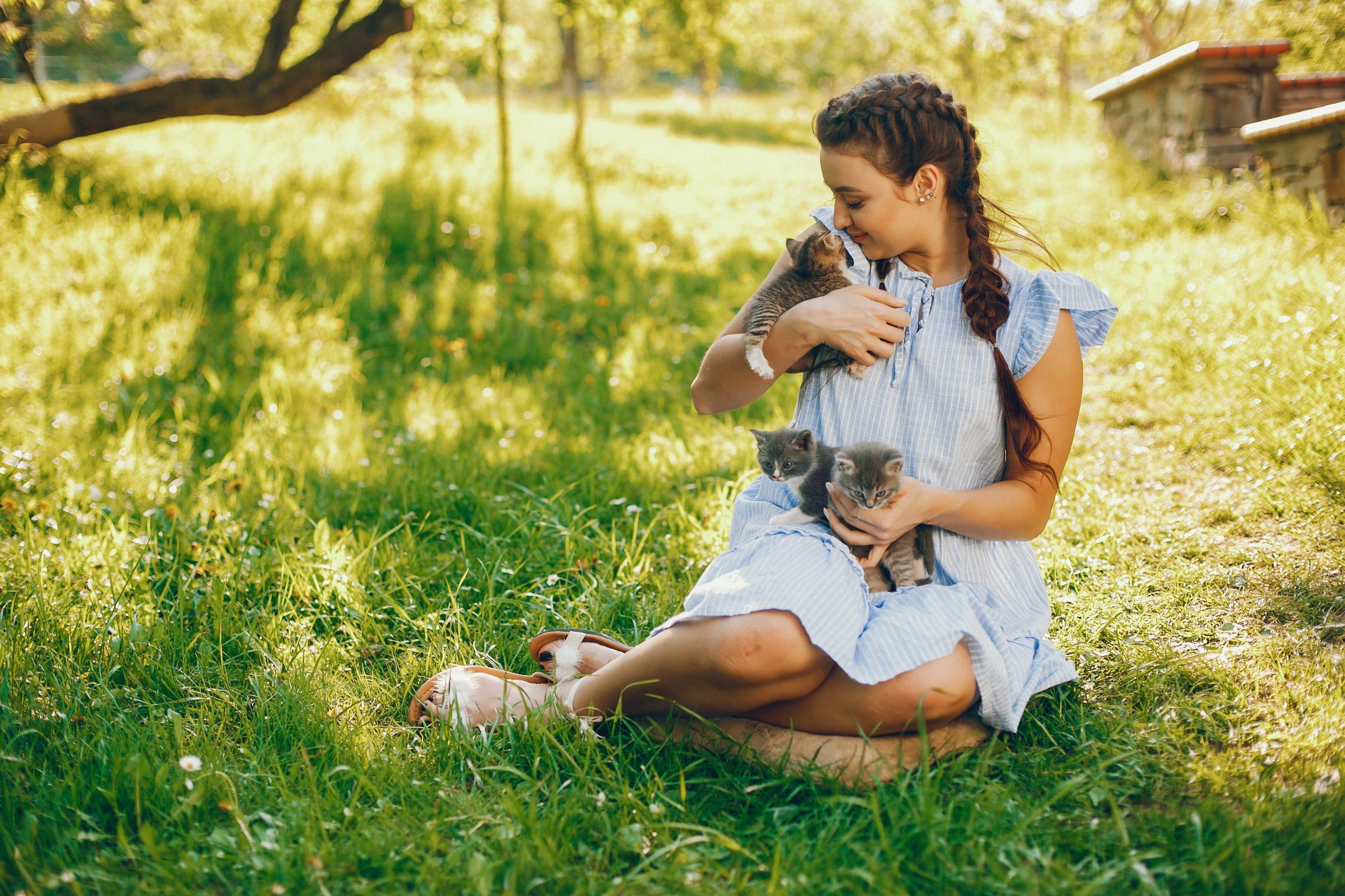Los gatitos que han sido socializados desde una edad temprana no deben ser tímidos o agresivos cuando se encuentran con nuevas personas.