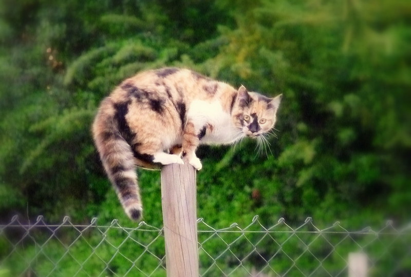 equilibrio gatos