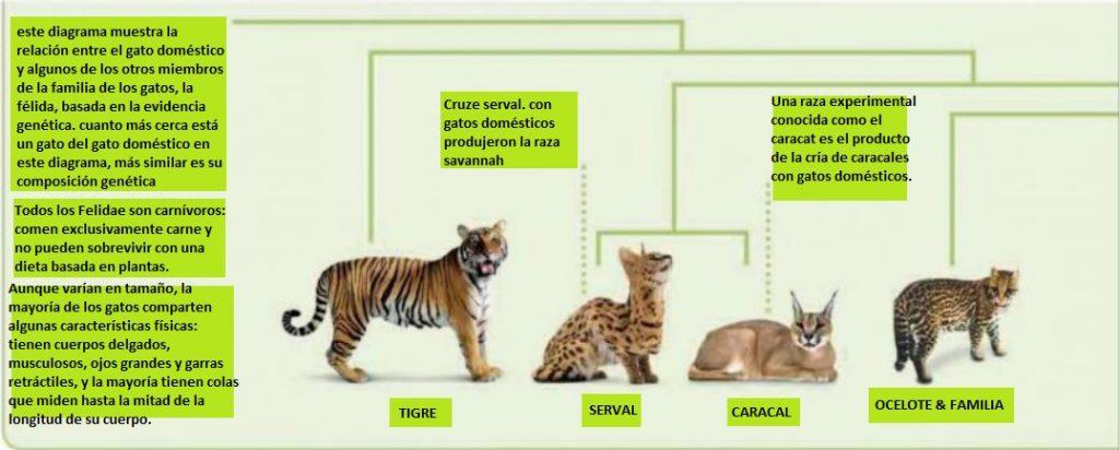 familia de los gatos