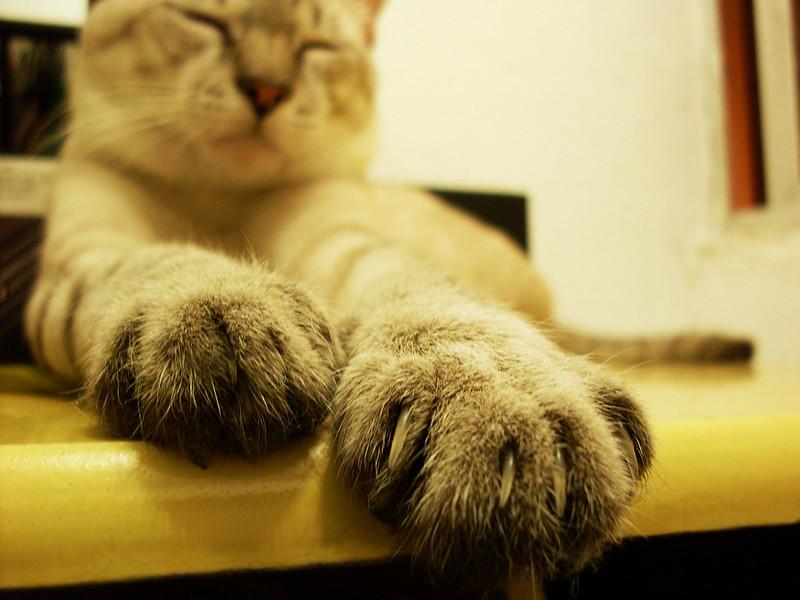 garras de gato