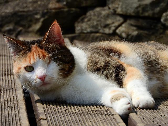 gato discapacitado