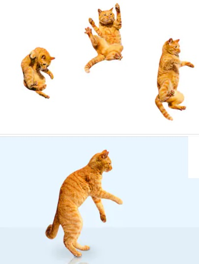 los gatos siempre caen de pie