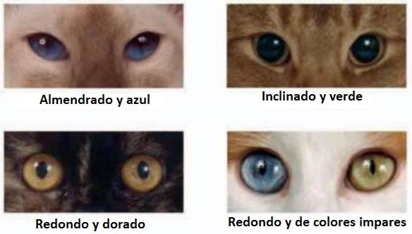 ojos de Color y formas del Gato