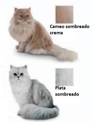tipo de piel de los gatos