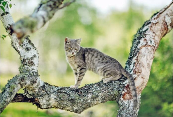 gato serengeti en lo alto de un árbol